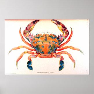 Regenbogen-Schwimmen-Krabbe Poster