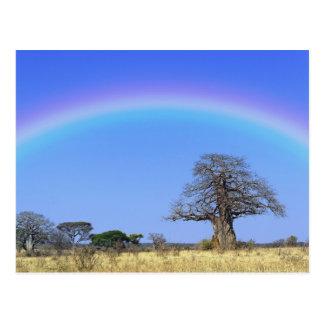 Regenbogen und afrikanischer Baobabbaum, Adansonia Postkarte