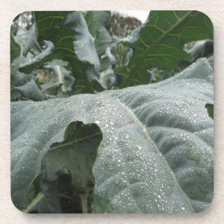 Regentropfen auf Blumenkohl-Blätter Getränkeuntersetzer