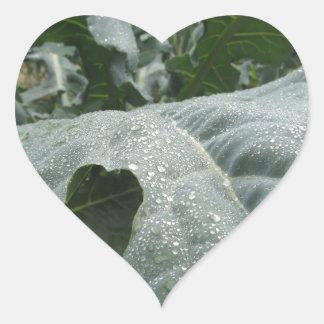 Regentropfen auf Blumenkohl-Blätter Herz-Aufkleber