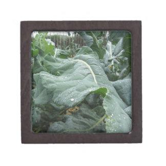 Regentropfen auf Blumenkohl-Blätter Kiste