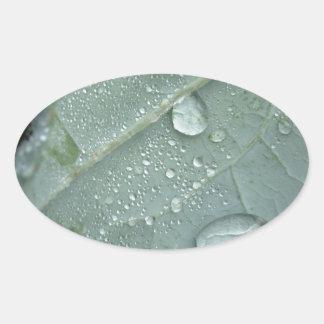 Regentropfen auf Blumenkohl-Blätter Ovaler Aufkleber
