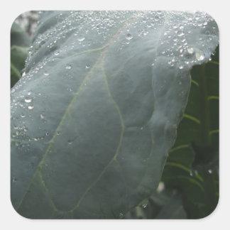 Regentropfen auf Blumenkohl-Blätter Quadratischer Aufkleber