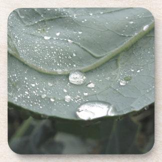 Regentropfen auf Blumenkohl-Blätter Untersetzer