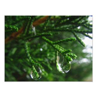 Regentropfen auf einem Baumast Kunst Photo
