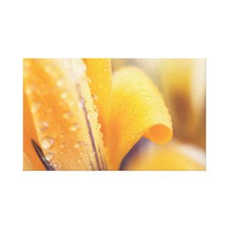 Regentropfen auf einer gelben Winter-Blume Gespannte Galeriedrucke