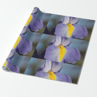 Regentropfen auf einer lila und gelben Iris Geschenkpapier