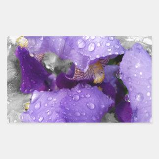 Regentropfen auf Iris Rechteckiger Aufkleber