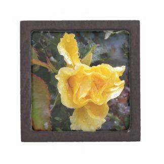 Regentropfen auf Rosen - gelbe Rose Schmuckkiste