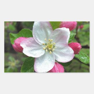 Regentropfen auf weniger Blume Rechteckiger Aufkleber