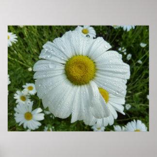 Regentropfen auf Wildblume-Natur-Fotografie des Poster