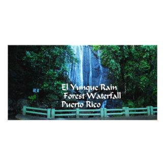 Regenwald EL Yunique Karte