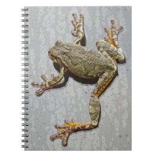 Regnerischer Tagesbaum-Frosch auf Glas Notizblock