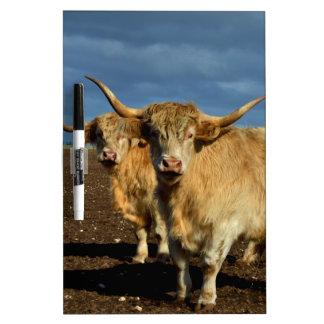 Rehbraune Hochland-Kühe, Trockenlöschtafel