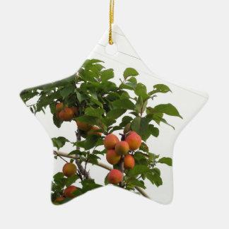 Reife Aprikosen, die am Baum hängen. Toskana, Keramik Ornament