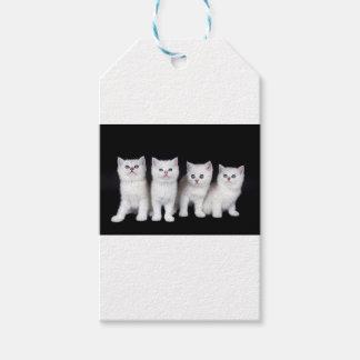 Reihe von vier weißen Kätzchen auf schwarzem Geschenkanhänger