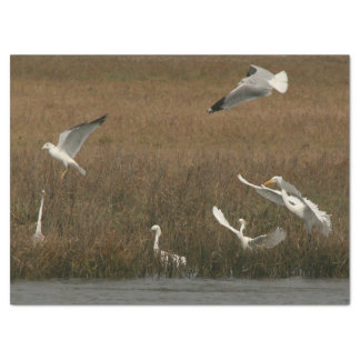 Reiher-Seemöwe-Vogel-wild lebende Tiere Seidenpapier