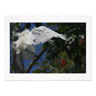Reiher-Vogel-Tier-Tier-Fotografie Kunst Foto