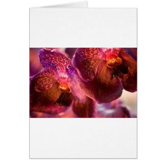 Reine Wachs-Blumen Orchideen-Vandas Grußkarte