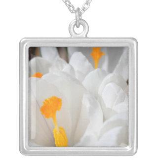 reine weiße Krokus-Blumen Versilberte Kette