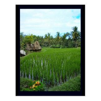 Reis-Paddy, Ubud Bali, Indonesien Postkarte