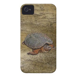 Reißende Schildkröte Dosenschildkröte-Liebhaber iPhone 4 Case-Mate Hülle