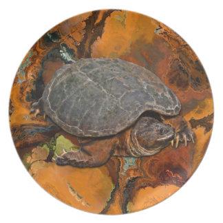 Reißende Schildkröte Dosenschildkröte-Liebhaber Teller