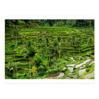 Reisterrasse in Bali Postkarte