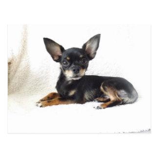 Reizende Chihuahua Postkarte