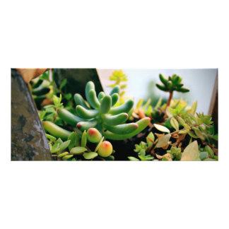 Reizende eingemachte Pflanzen Werbekarte