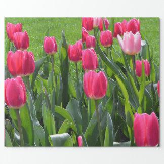 reizende Frühlingsrosa-Tulpe-Blumen. Garten mit Geschenkpapier