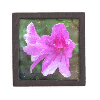 Reizende rosa Garten-Blumen mit Regentropfen. mit Kiste