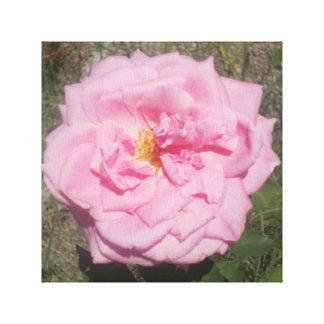 reizende rosa Rose Leinwanddruck