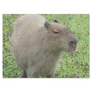 Reizender Capybara Seidenpapier