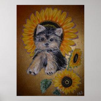 Reizender kleiner Hund und Sonnenblumen Poster