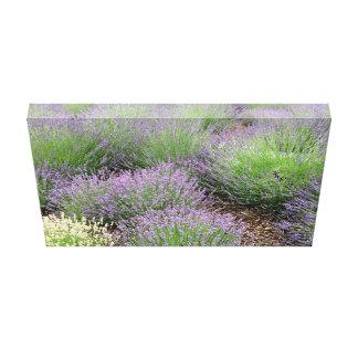 Reizender Lavendel Leinwanddruck