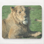 Reizender Löwe Mauspads
