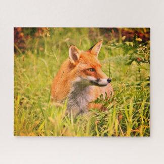 Reizender Vixen - roter Fox im schottischen Puzzle