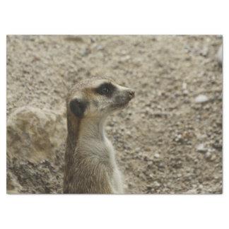 Reizendes meerkat seidenpapier