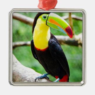 Reizendes Toucan Silbernes Ornament