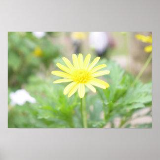 Reizendes wildes Sonnenblume-Plakat Poster