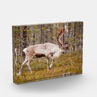 Ren, das in Wald geht Acryl Auszeichnung