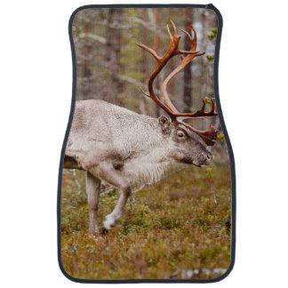 Ren, das in Wald geht Autofußmatte