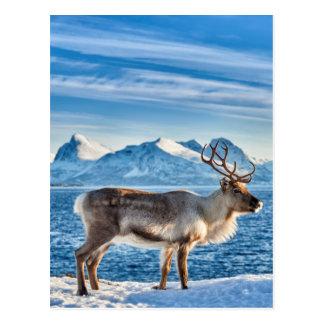 Ren im Schnee umfaßte Landschaft in Meer Postkarte