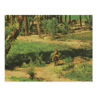 Replik Vintages Ägypten, Nildelta Landwirtschaft Postkarten