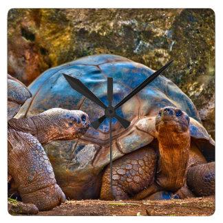 Reptil-Galapagos-Schildkröten-Wanduhr Quadratische Wanduhr
