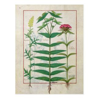 Reseda, Euphorbiengummi und Dianthus Postkarte