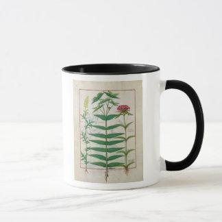 Reseda, Euphorbiengummi und Dianthus Tasse