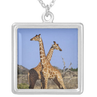 Retikulierte Giraffen, Giraffe camelopardalis 3 Halskette Mit Quadratischem Anhänger