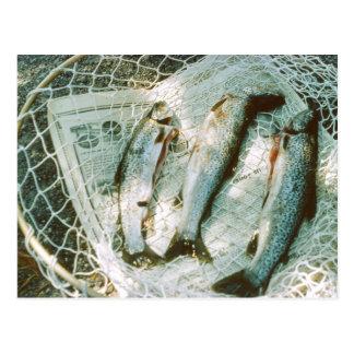 Retro Fischernetz-und Forelle-Postkarte Postkarte